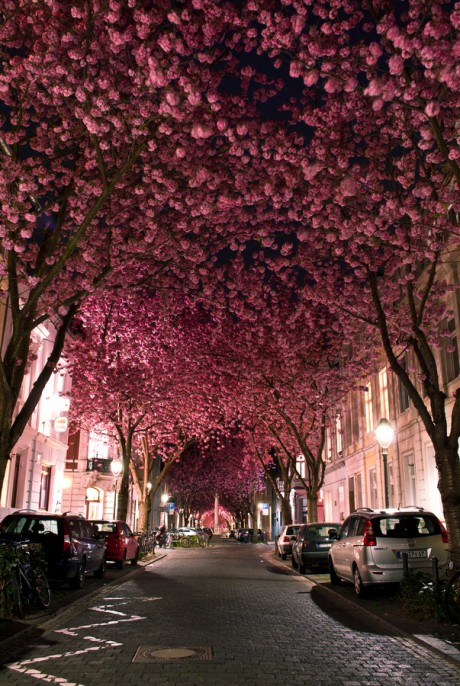 Paris Streets in Spring